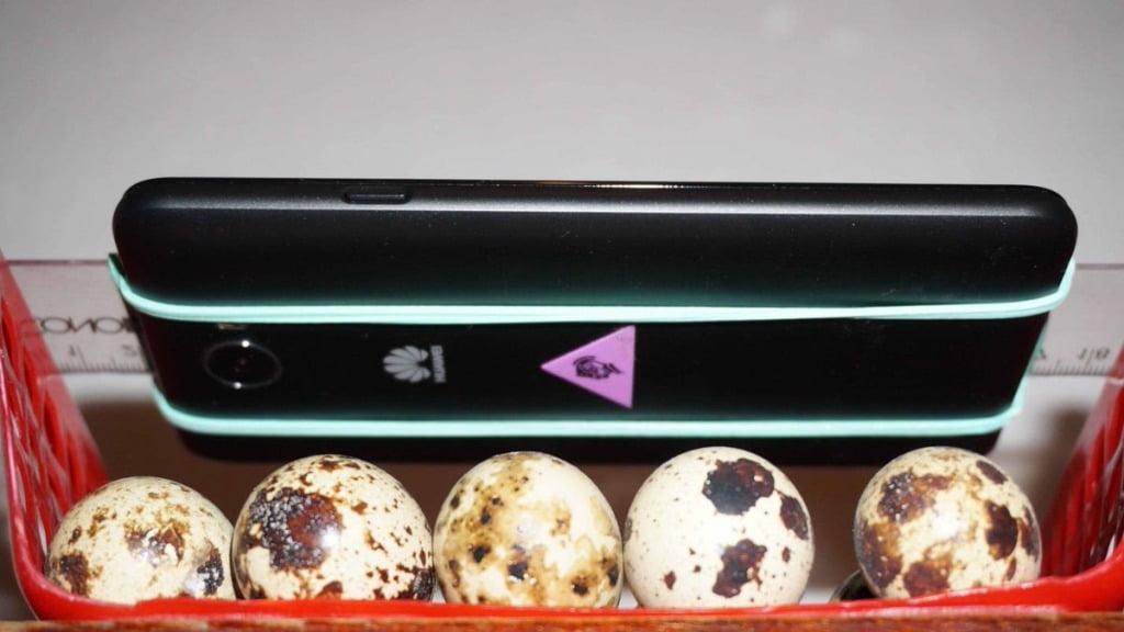 Waveex bảo toàn bộ gen ADN với nghiên cứu trên trứng chim cút